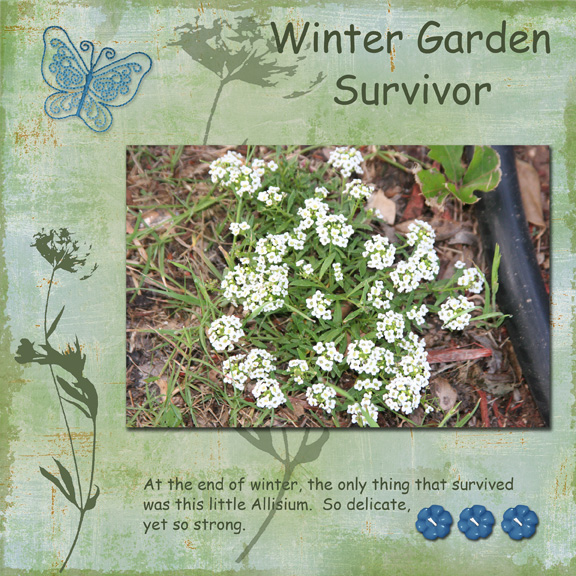 Winter Survivor