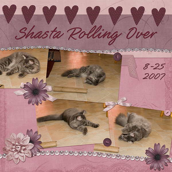 Shasta Rolling Over