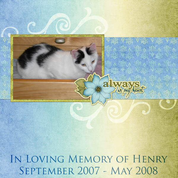 Goodbye Sweet Kitty