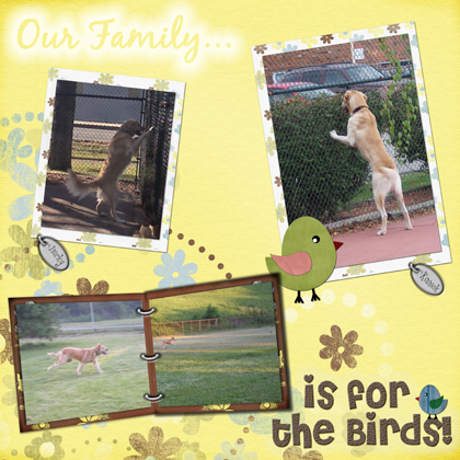Our Family is for the Birds