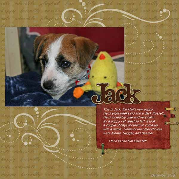 Jack the puppy