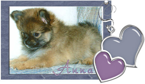 anna, the joy of my life our pomerian.