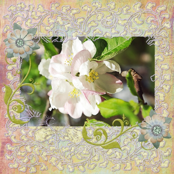 Apple Blossom 4-14-10
