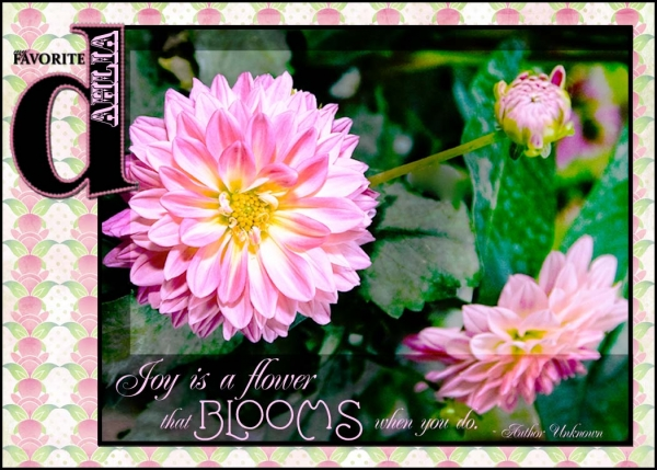 ATC My favorite Pink Dahlias