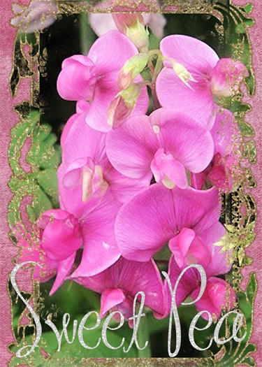 March ATC - S is for Sweet Pea