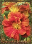 March ATC - N is for Nasturium