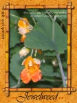 1st ATC Feb 2011 - Jewelweed