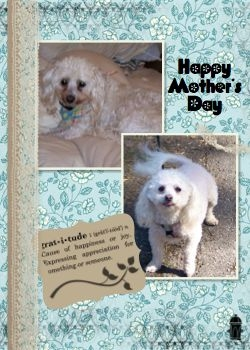 Mother's Day card from the Dogs