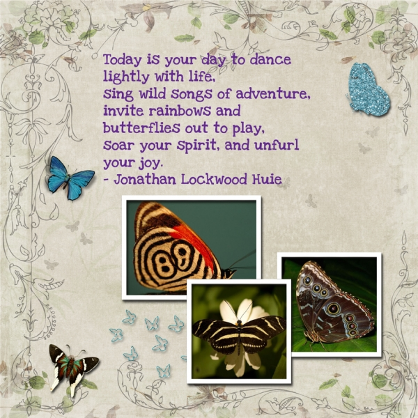 Saturday 2-11-12 Challenge -- Butterflies