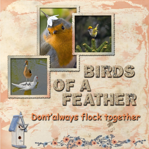 Saturday 3-10-12 Color Challenge -- Birds of a Feather