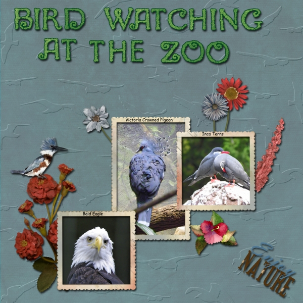 5-5-12 Color Challenge -- Bird Watching At The Zoo
