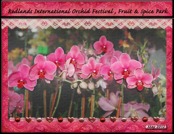 Orchid Row - Redlands Int'l Orchid Festival