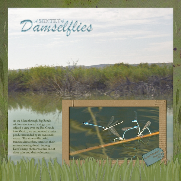 Sextet of Damselflies (5/14 Flying things challenge)