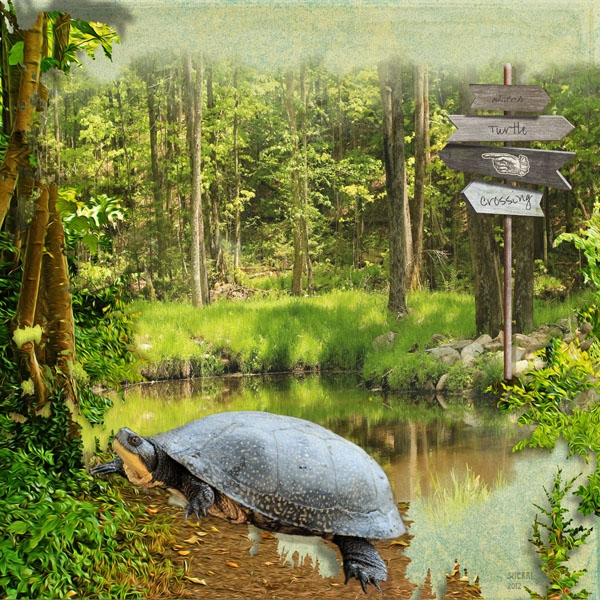 Turtle Crossing 2012