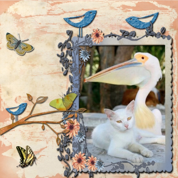 Tuesday 8-7-12 Freebie Challenge -- Pelican and Cat