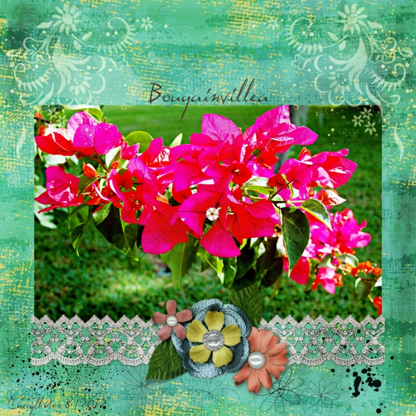 Aug 21 - Freebie - Bougainvillea