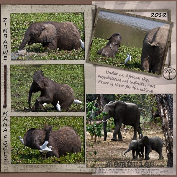 Ellies at Mana Pools, Zimbabwe