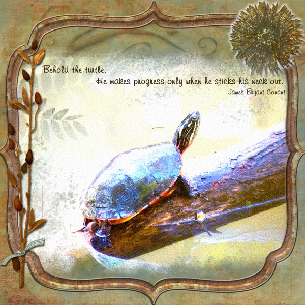 "Fun Little Suprise Challenge - DSD 2012: ""Melinda's Turtle"""