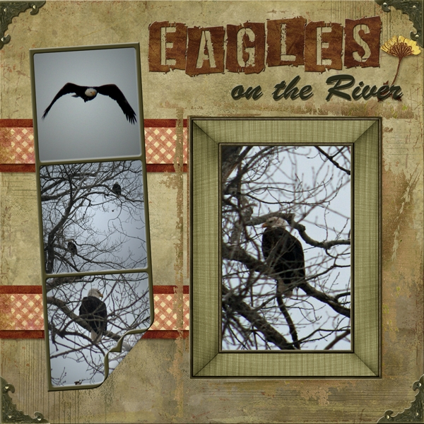 Eagles on the River