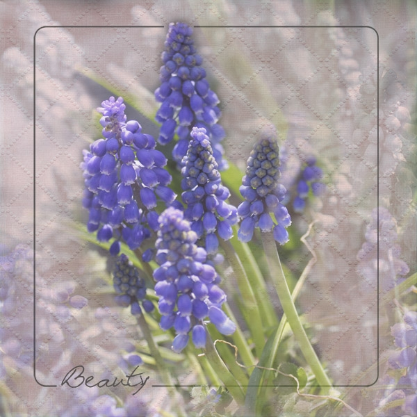 Grape Hyacinth-All in Us Challenge