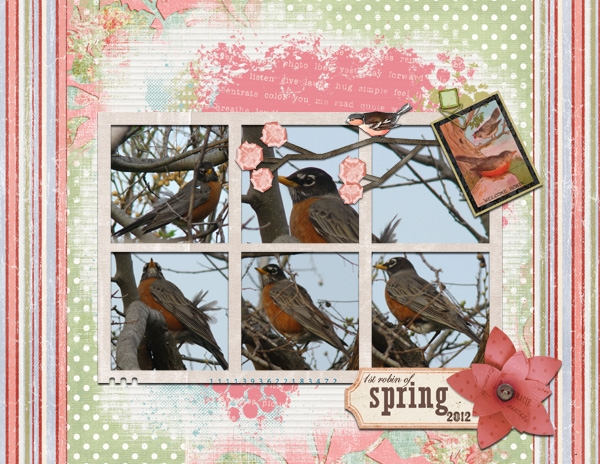 13Apr13 - First Robin of Spring