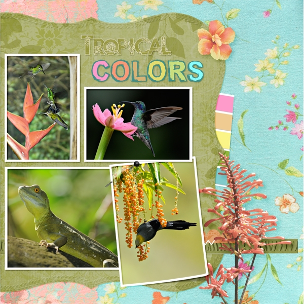 Tropical Colors, rt - Color Chall 4/27
