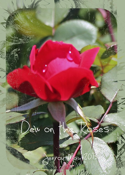 Dew on the Rose-ATC Swap May