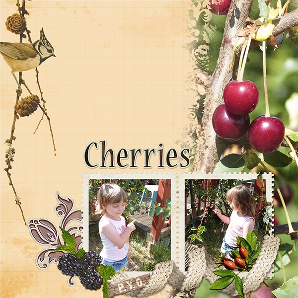 Nature's Bounty - Cherries