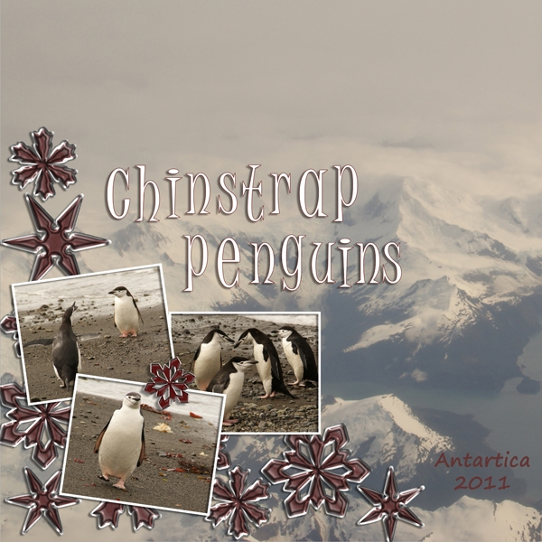 Nov. 11th - Chinstrap Penguins