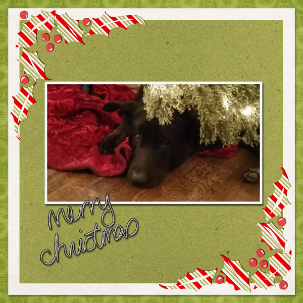 Merry Christmas from Dusty!