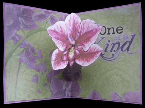 10) One Of A Kind Orchid
