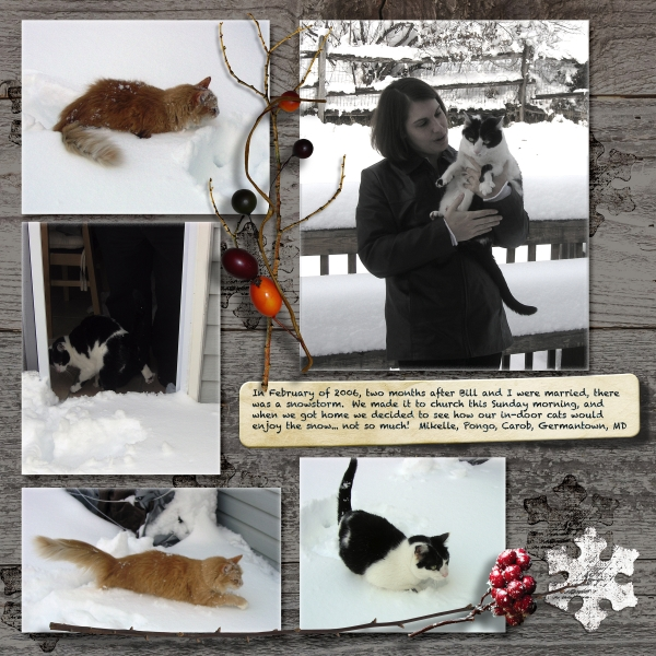 A Snow Day for Cats