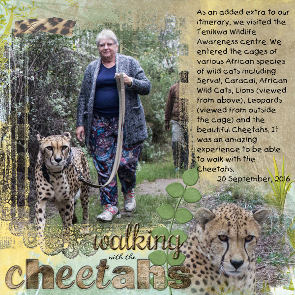 Oct CSS Week2 - Walking with the Cheetahs