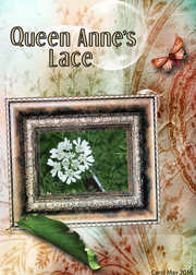 Queen Anne's Lace -- May ATC