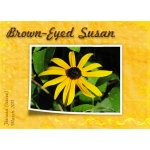 Round 2  B for Brown-Eyed Susan