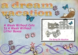 Dream Vacation -- Cats On Vacation