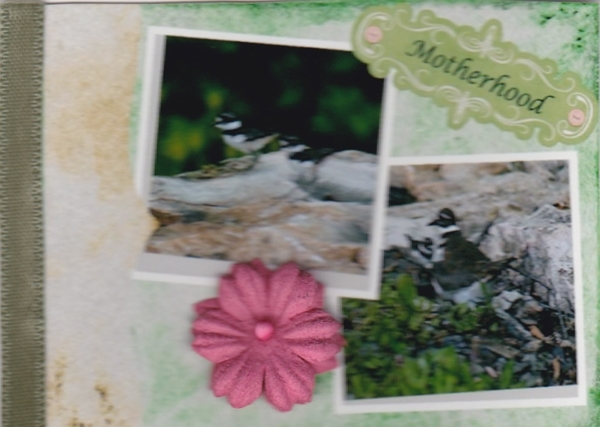 The Beauty of Nature ATC
