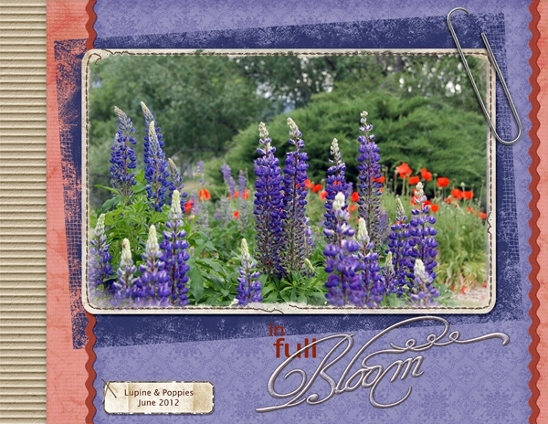 Lupine & Poppies