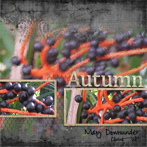 Autumn: May Downunder Close-Up