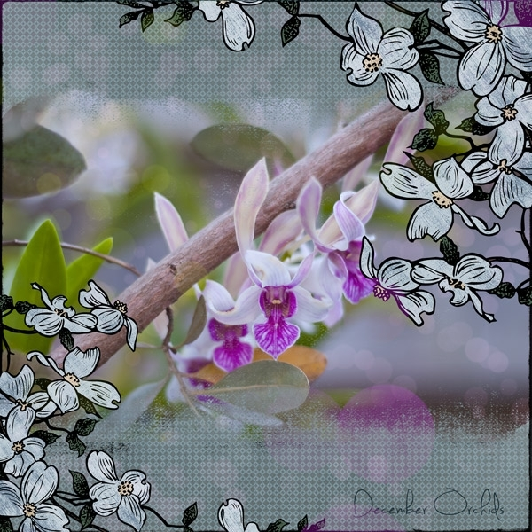 Feb 5 - Freebie - December Orchids