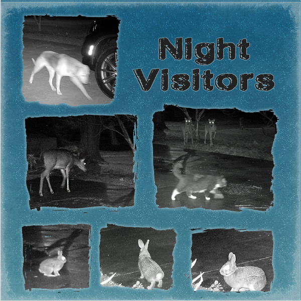 Night Visitors - left page