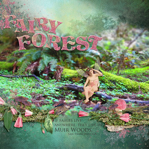 Fairy Forest