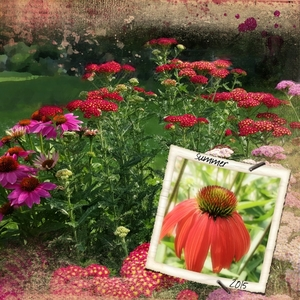flowers summer Of 2015 webcopy