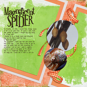 Thursday 11th - blog inspired - Magnificent Spider