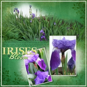 Irises in Bloom - NSD Color Challenge