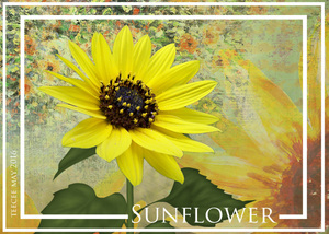 May ATC Sunflower
