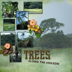 Trees Along The Amazon