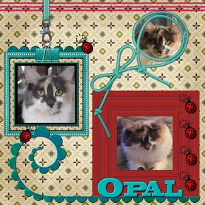Miss Opal - My Furry Treasure