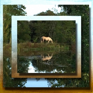 Horse pond Web copy