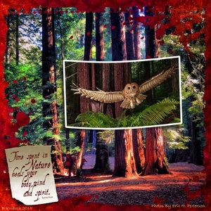 Redwood Grove Web copy